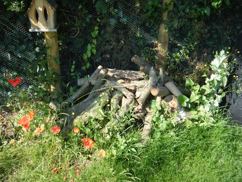 Log pile in summer