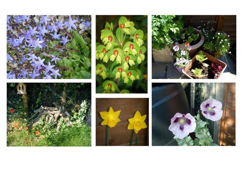 Garden Colours of 2011