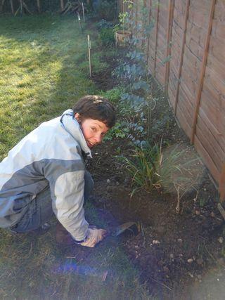 Digging up daffs