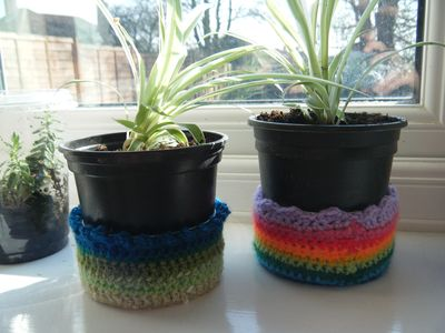 Repotted spider plants