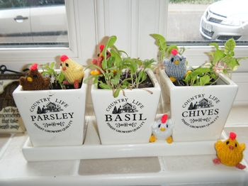 Knitted chicks playing in the herbs