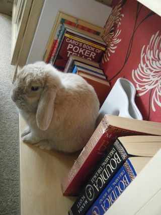 Honey rabbit on the shelf