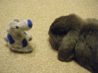 Felt dog meets rabbit