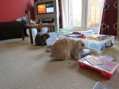 Rabbits helping