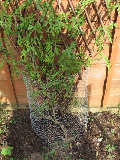 Garden improvements (9)