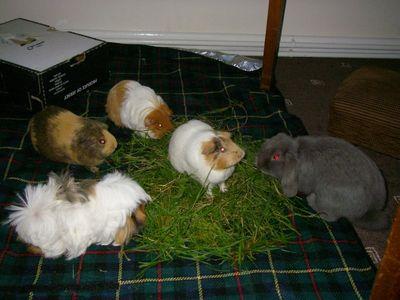 03 Putnum and guinea pigs