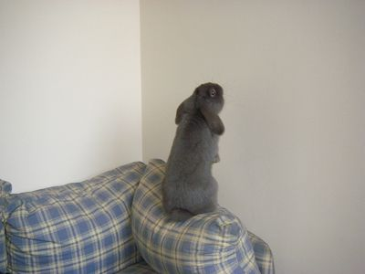 05 Putnum on sofa
