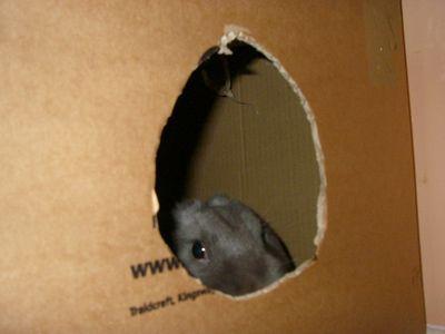06 Putnum in a box