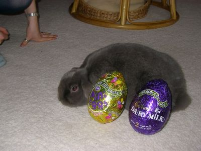 09 Putnum with Easter eggs