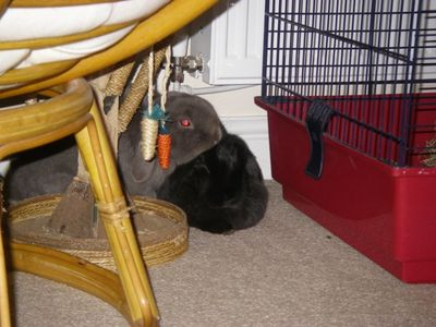 15 Putnum and Dora snuggle