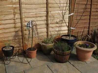 Springtime - patio pots