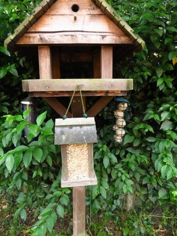 Bird seed filled up