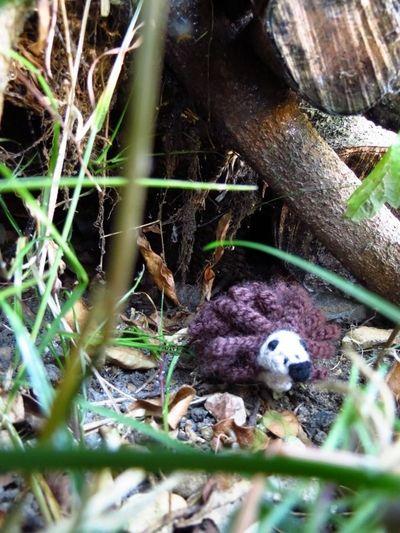 Crochet hedgehog (2) (600x800)