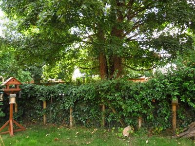 Massacred hedge (2) (800x600)