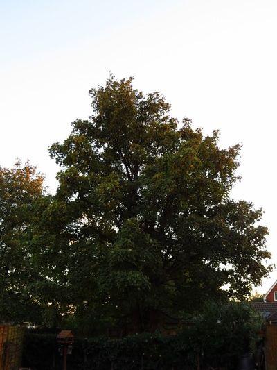 Autumn Colours (15)