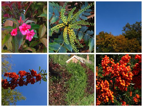 Autumn Collage 02