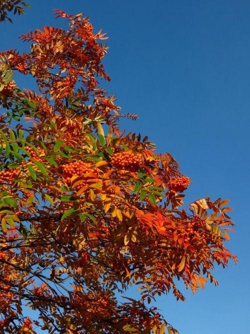 Autumn Colours (37)