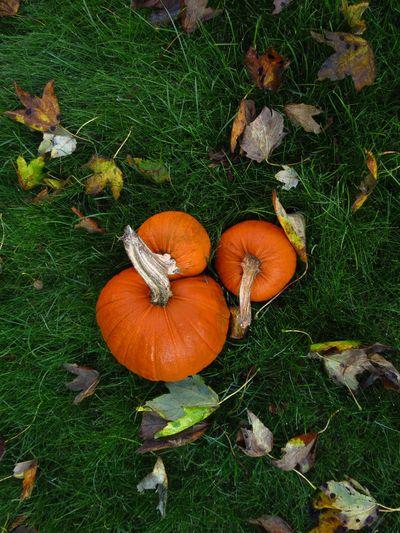 Autumn Colours (19)