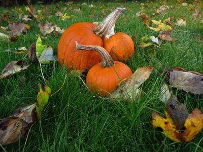 Autumn Colours (18)