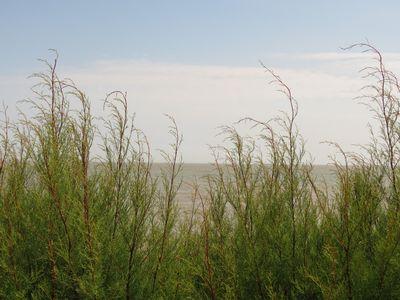 Beach Day (2)